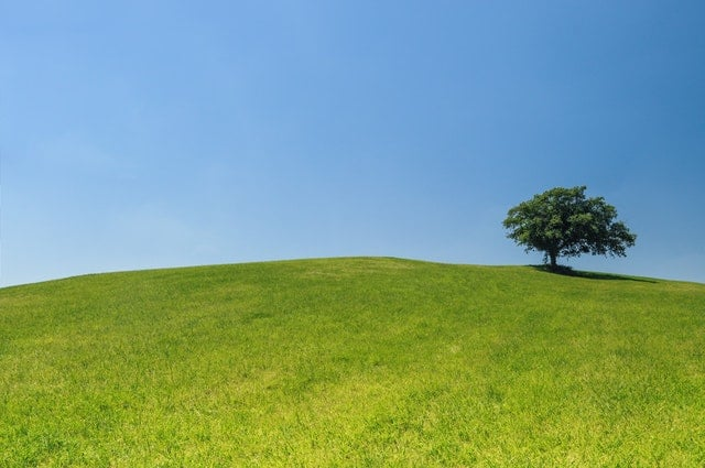 lonely tree on hill